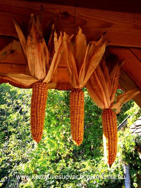 kukorica2